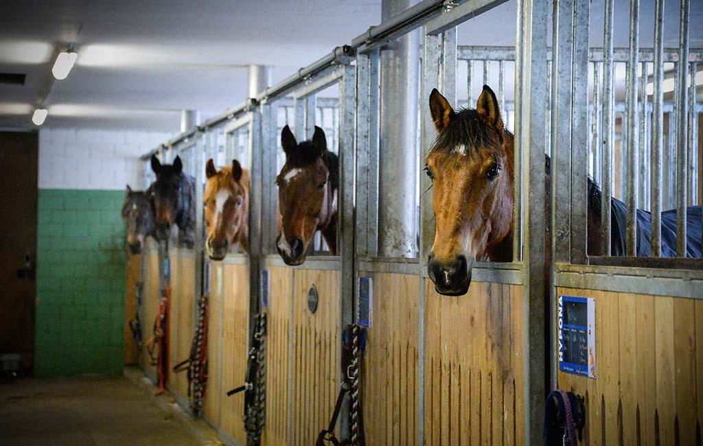 Die Pferdepension im Grünen